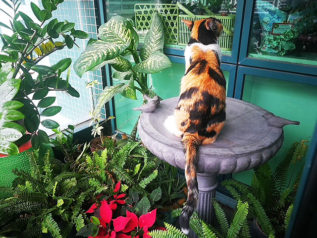 Milonga loves to spend hours in our balcony, watching birds dancing in the air. She secretly hopes to snare one .