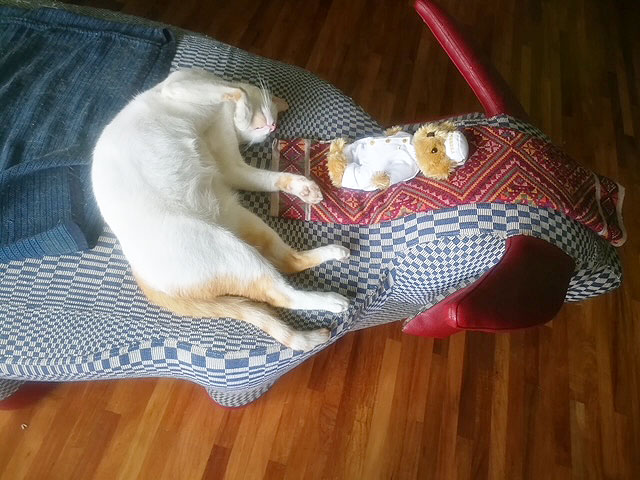 Merengue  dozing off on the Tamaraw settee with his toy bear.