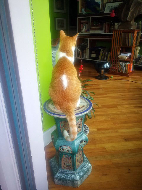 Jarocho, my butter ball, jumped on the pedestal when he saw an insect fly in  from the balcony.