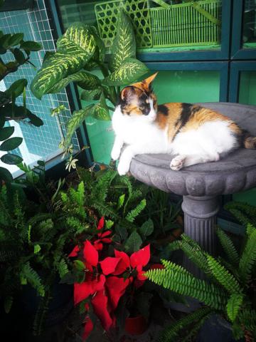 Milonga, on her throne, a bird bath from Michelle & Martin Galan of House of Pre-cast, my dear friends.